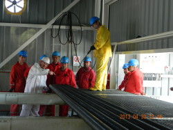Work procedure training, Poeni/Romania